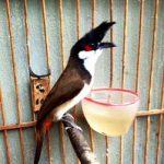 Chim thi – những điều cần biết
