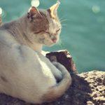 Mèo có thể uống nước biển thoải mái mà không chết