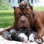10 loài chó hung dữ nhất thế giới