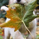 Những chú chó đáng yêu và hài hước nhất của năm