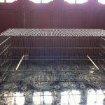 Bài 4. Chế độ chăm sóc chim chào mào căng lửa