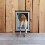 Căn nhà nhỏ cho động vật đẹp