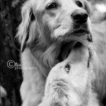 Tổng hợp những cún con cực kỳ dễ thương