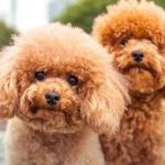 Ten Popular Myths About Grooming Dogs