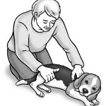 Managing Your Beagle's Day-to-Day Health