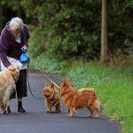 5 Lời khuyên để giữ chó già của bạn khỏe mạnh