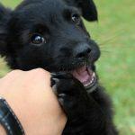 5 vấn đề về da chó thường gặp
