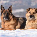 7 Chuyện về Chó Và Mùa Đông