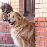 5 Lời khuyên phòng bệnh dại cho chó