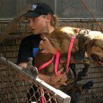 Khoảnh khắc đó khi một con chó được giải thoát khỏi kẻ ngược đãi [12 POWERS]