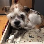 The Special Needs of Senior Dogs