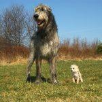 10 loài chó thân thiện với trẻ em để nuôi trong nhà