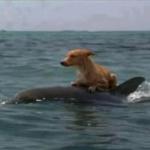 Cá voi cứu sống con chó trên biển