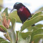 Sự phân bố các loài chim
