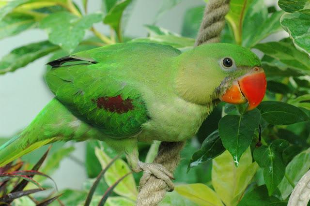 Loài chim nào có thể dạy nói được ?
