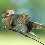 Nghệ thuật nuôi chim cảnh