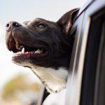 Con chó của bạn biết khi bạn đang buồn bã, và muốn giúp đỡ
