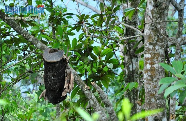 Những chiếc tổ giả được người dân treo trên cành của những ngọn cây cao trong rừng