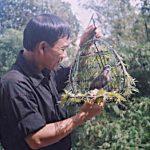 Chơi cu gáy – một thú tiêu dao của người miền Trung