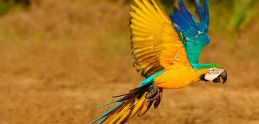 Những giống vẹt được yêu thích nhất Việt Nam
