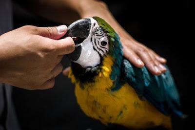 Phòng và chữa bệnh cho chim cảnh