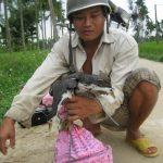 Tàn sát chim trời bằng máy nhử chim của Trung Quốc