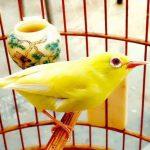 Điểm danh những khu chợ chim cảnh TPHCM