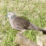 Cảm nhận về chim giọng chim qua hình dáng bên ngoài.