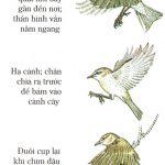 Cơ thể học và sinh lý chim