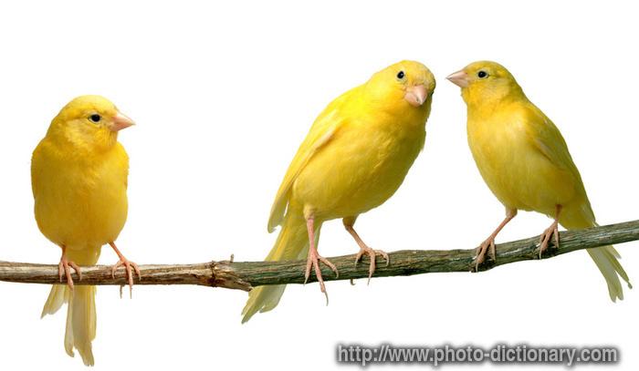 Thiếu Vitamin A xảy ra khi bạn chỉ cho chim ăn các loại hạt, chế độ ăn kém dinh dưỡng