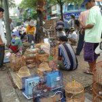 Những khu chợ chim náo nhiệt ở Sài Gòn