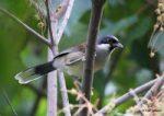 Công thức các loại thức ăn cho chim