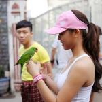 Kỹ thuật nuôi dạy Vẹt (két) nói được, cách huấn luyện và chăm sóc Vẹt