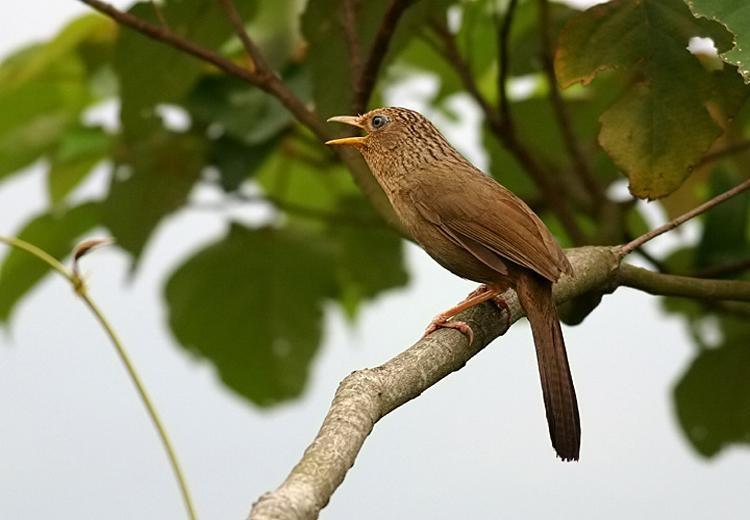 chim hoa mi khi thay long
