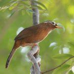 Những loài chim cảnh đẹp mà bạn nên nuôi ở Việt Nam