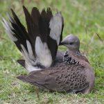 Cách chọn chim mồi đất – đánh dò