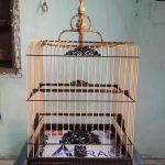 Phụ kiện cần thiết để nuôi chim chào mào