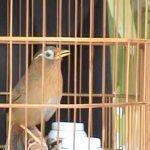 Làm giàu bằng việc nuôi chim cảnh, tại sao không?