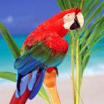 Chọn mua chim cảnh như thế nào?