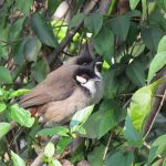 Bài 5. Chữa bệnh cho chim chào mào
