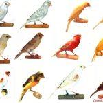 Đôi điều về Chim Yến
