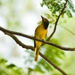 Tổng hợp những loài chim cảnh dễ nuôi nhất tại Việt Nam