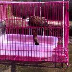Cách tắm cho chim chào mào đúng cách dễ thực hiện nhất