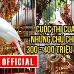 Cuộc thi của những chú chim 300 – 400 triệu VNĐ