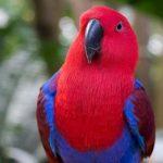 Top 6 Loài chim cảnh biết nói thông minh nhất thế giới