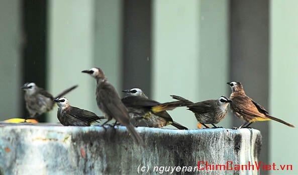 Chim Quành Quạch