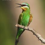 Kinh nghiệm nuôi chim cảnh làm giàu
