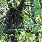 Nhánh thế và một số kỹ thuật khi đánh lụp cây ở Chim Cu Gáy