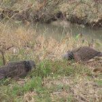 Tổng hợp : Cách chọn chim mồi đất – đánh dò