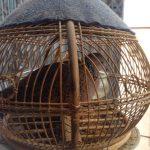 Hướng Dẫn Các Bạn Cách Nuôi Và Huấn Luyện Chim Cu Khách